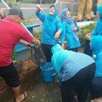 Panen Ikan Lele Yumina di Mina Taruna desa Karang Gedang