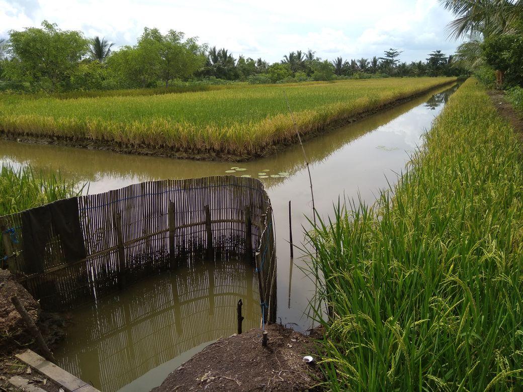 Pelatihan Penerapan Teknologi Budidaya Air Payau di Desa Grugu Kec. Kawunganten (4)