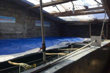 Kunjungan Dinas Perikanan Kota Tegal di HSRT Wijayakusuma (9)