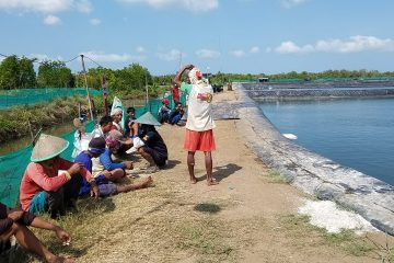Monitoring dan Pembinaan pada Kelompok Budidaya Udang Windu Langgeng (7)
