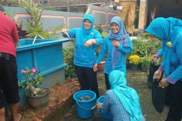 Panen Ikan Lele Yumina di Mina Taruna desa Karang Gedang (4)
