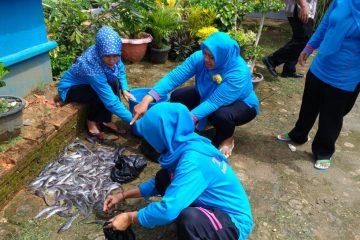 Panen Ikan Lele Yumina di Mina Taruna desa Karang Gedang (6)