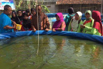 Pelatihan Budidaya Ikan Air Tawar Desa Inovasi dan Desa Binaan PKK (7)