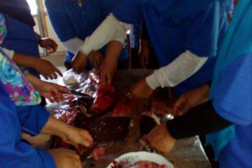 Pelatihan Pengolahan Ikan di POKDAKAN MEKARSARI Karangpucung (10)