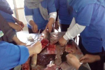 Pelatihan Pengolahan Ikan di POKDAKAN MEKARSARI Karangpucung (13)