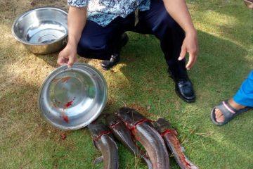 Pelatihan Pengolahan Ikan di POKDAKAN MEKARSARI Karangpucung (2)