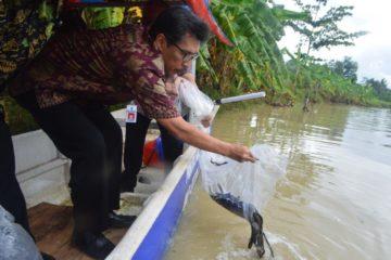 Perbaikan Stock SDI Jenis Ikan Sidat (15)