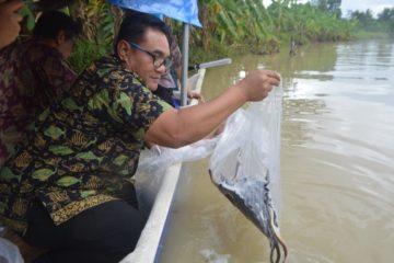 Perbaikan Stock SDI Jenis Ikan Sidat (16)