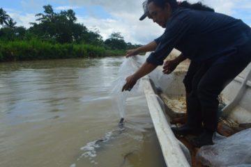Perbaikan Stock SDI Jenis Ikan Sidat (23)