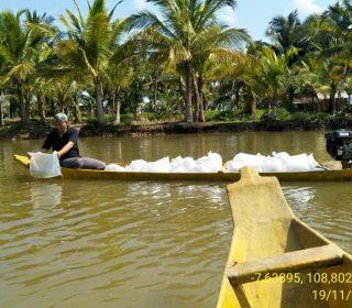 Restocking Ikan Nila Sidamukti (3)