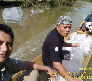 Restocking Ikan Nila Sidamukti (4)
